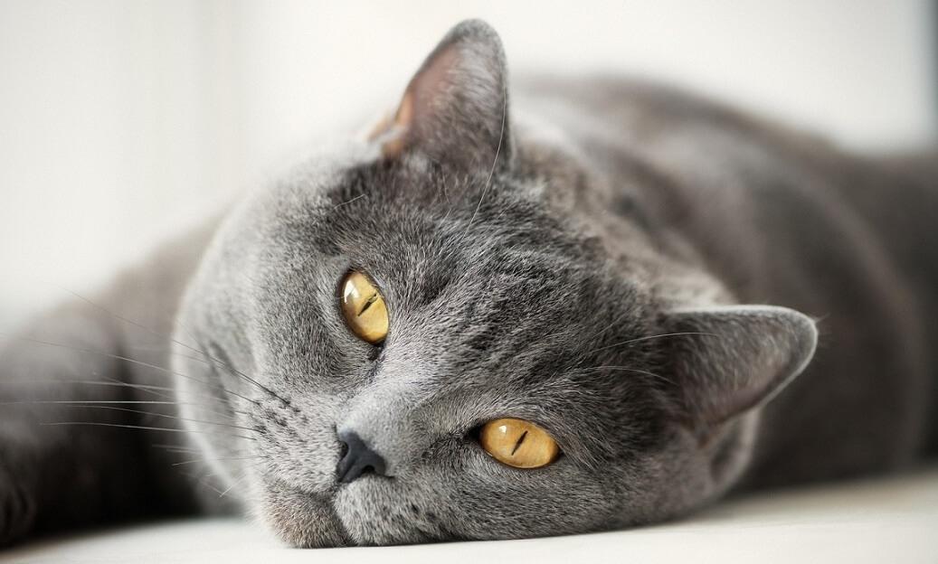 корм для стерилизированных кошек